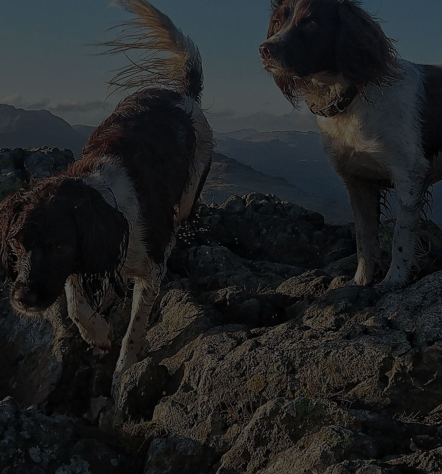 two happy dogs exploring promo